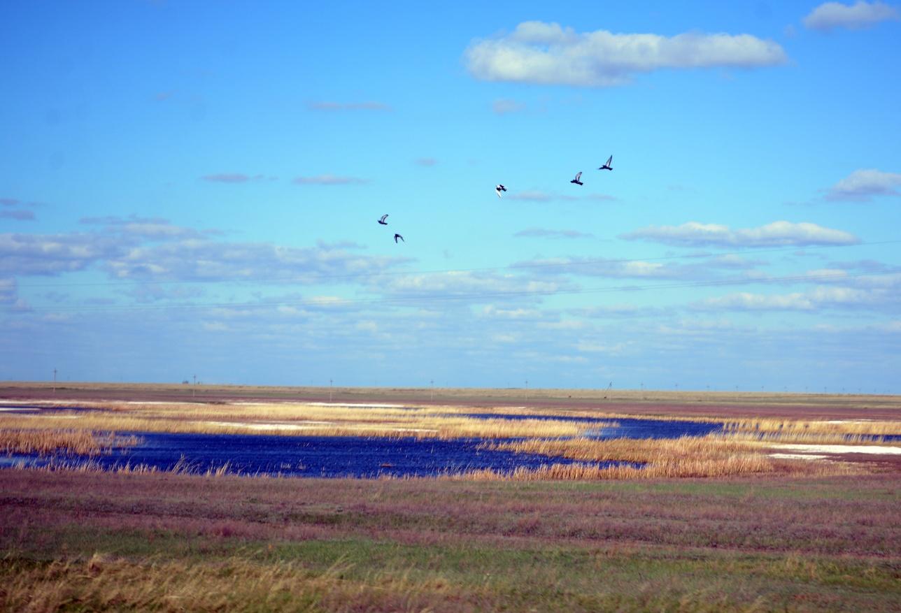 Чистота озёр привлекает десятки тысяч редких перелётных птиц