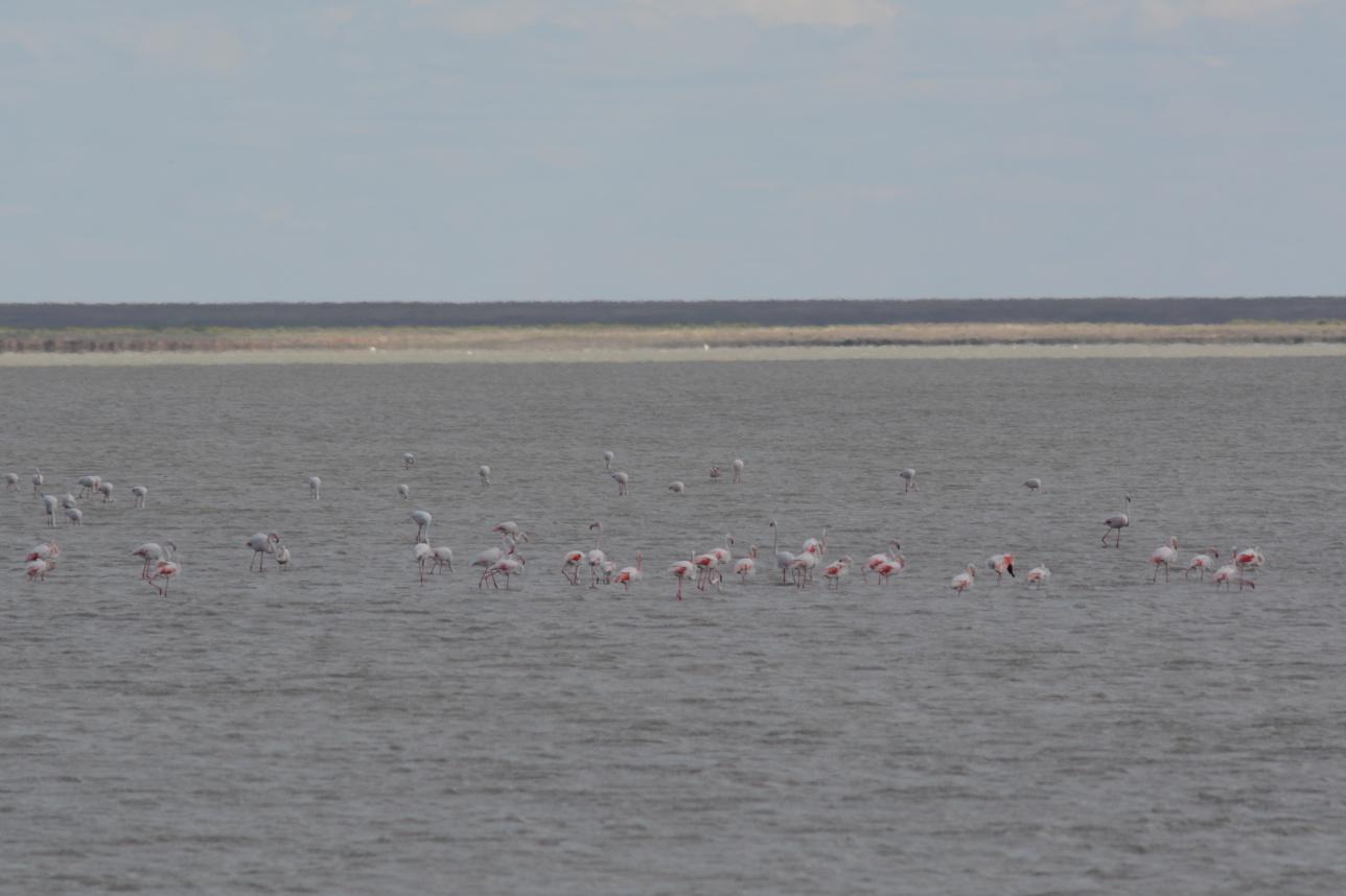 Фламинго выбрали озёра заповедника из-за их исключительной чистоты