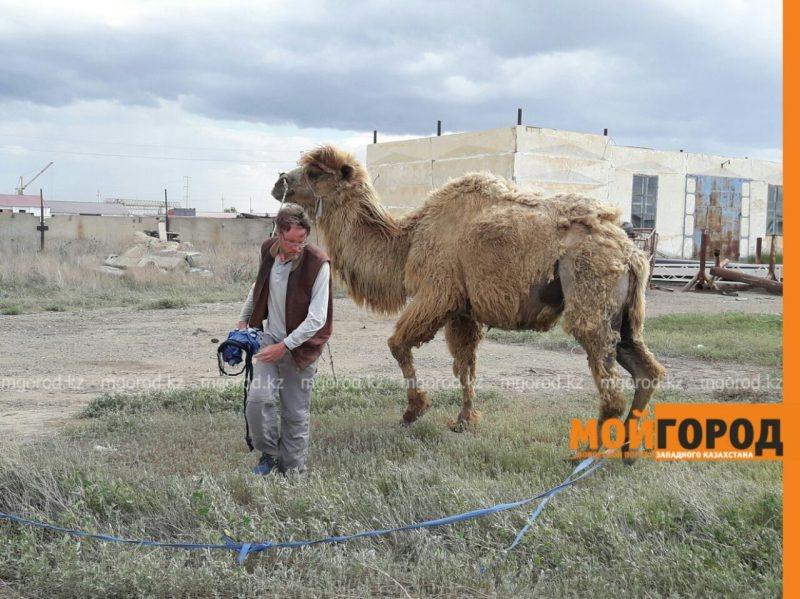 во всех путешествиях Кристиана Бодегрена сопровождают верблюды