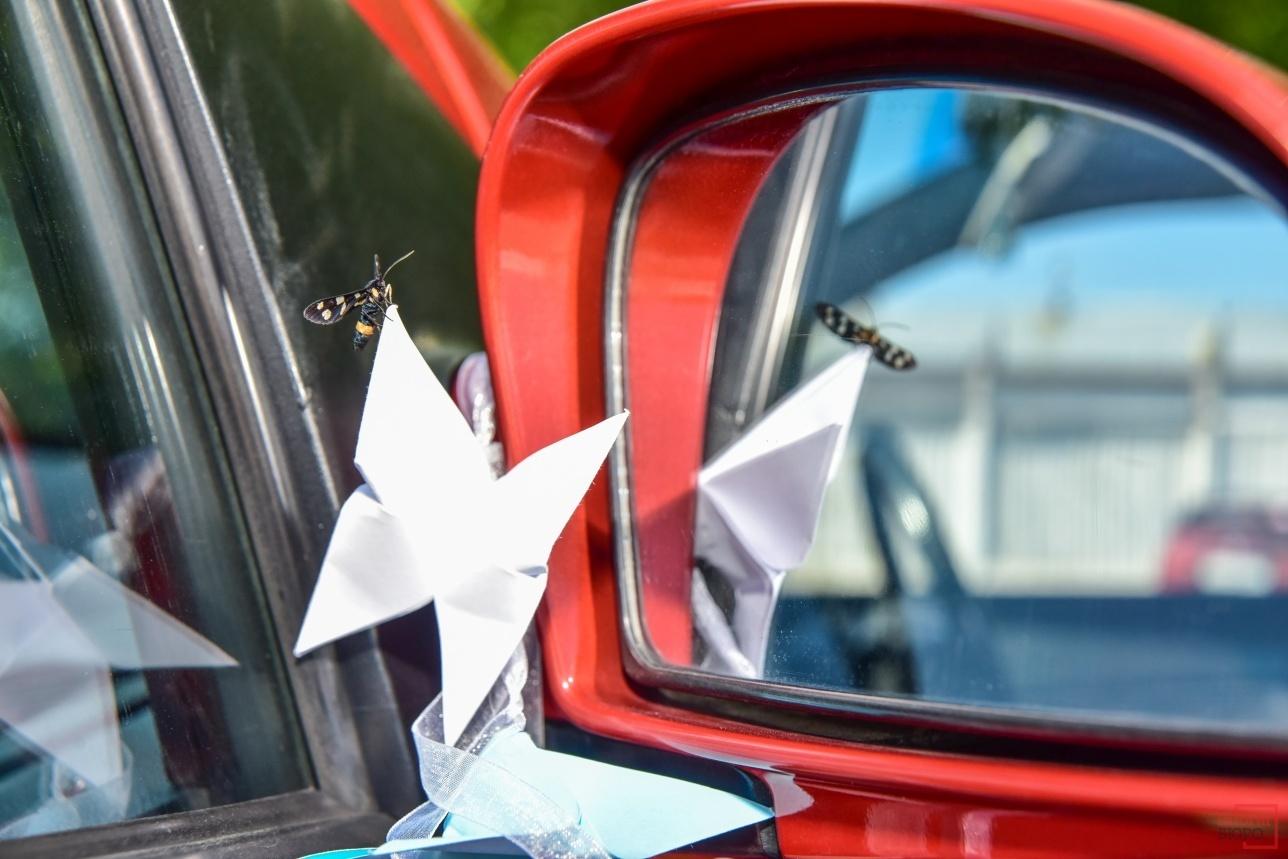 Машины украсили бумажными птицами