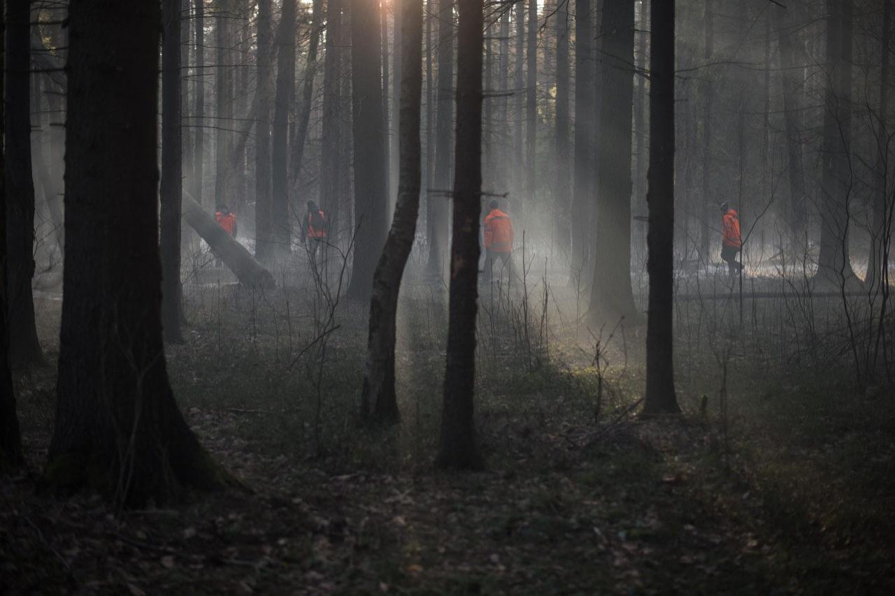 Сцена поисков Алёши в лесу