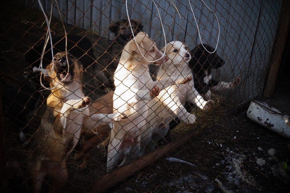 Бездомные собаки содержатся в спецприюте