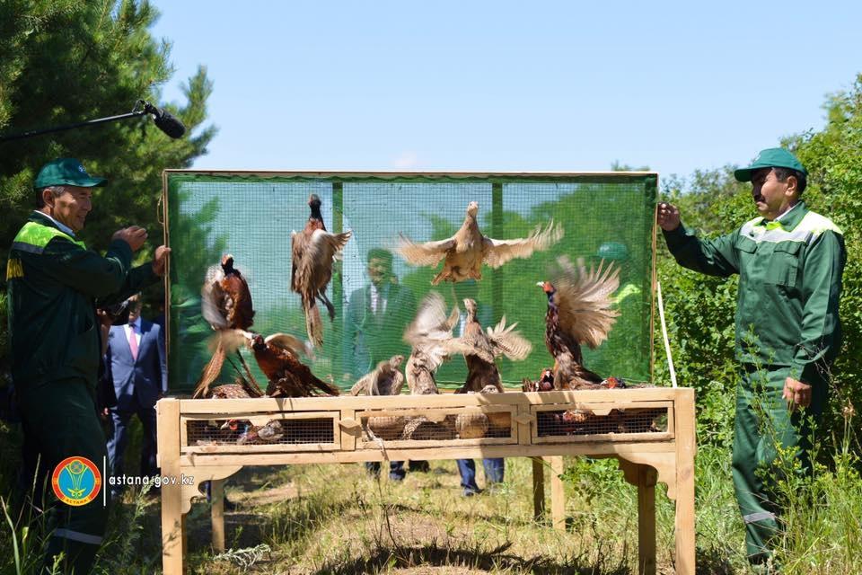 Во время визита Президента состоялся традиционный выпуск фазанов