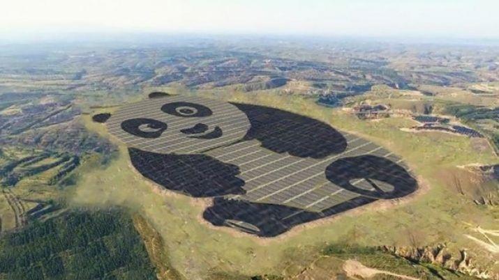 Эта панда будет освещать Китай