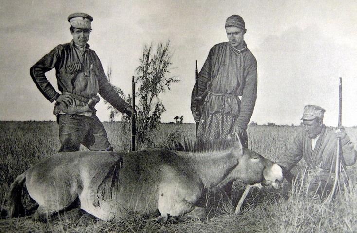 Братья-путешественники Грум-Гржимайло с ценным трофеем - лошадью Пржевальского