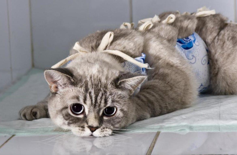 Бесплатная стерилизация животных в Алматы продолжается