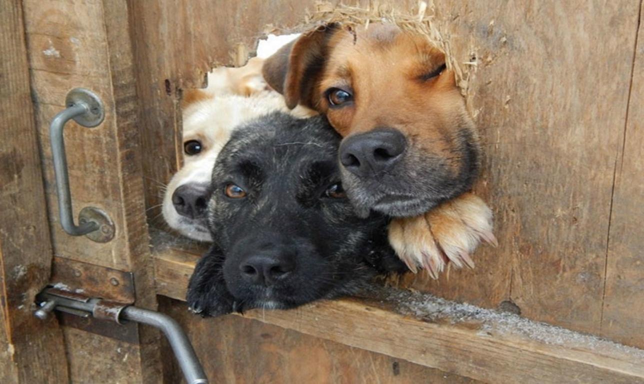 В Алматы уже в декабре могут открыться новые приюты для животных