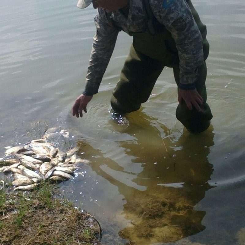 Рыбу в мелких реках можно ловить прямо руками