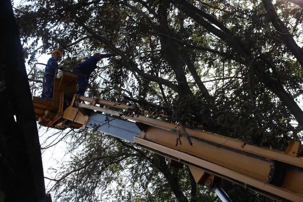 Рабочие спиливают дерево возле мебельного цеха