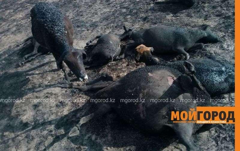 В пожаре погибло 100 коз и 90 овец