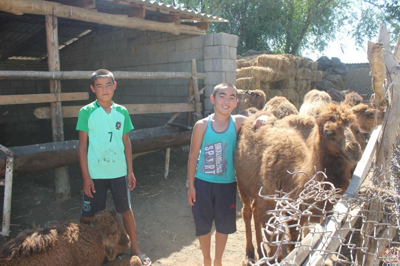 Внуки помогают бабушке ухаживать за верблюдами