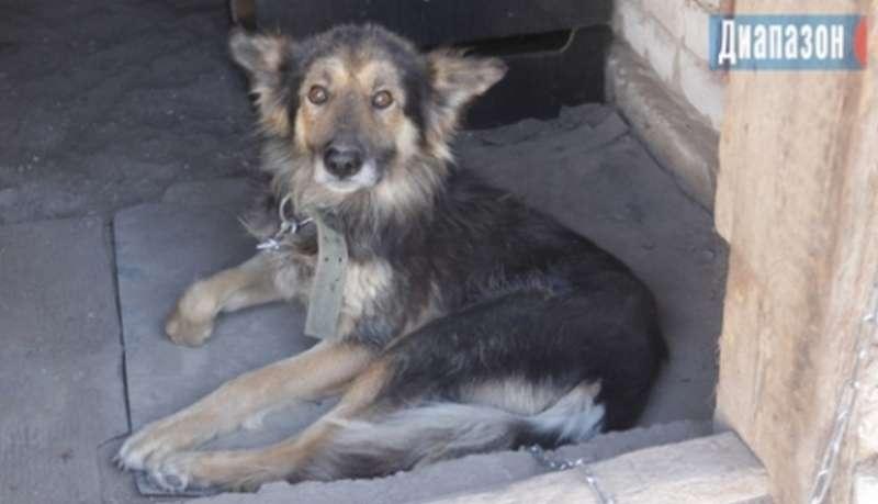 У собаки ранены задняя и передняя лапы с правой стороны