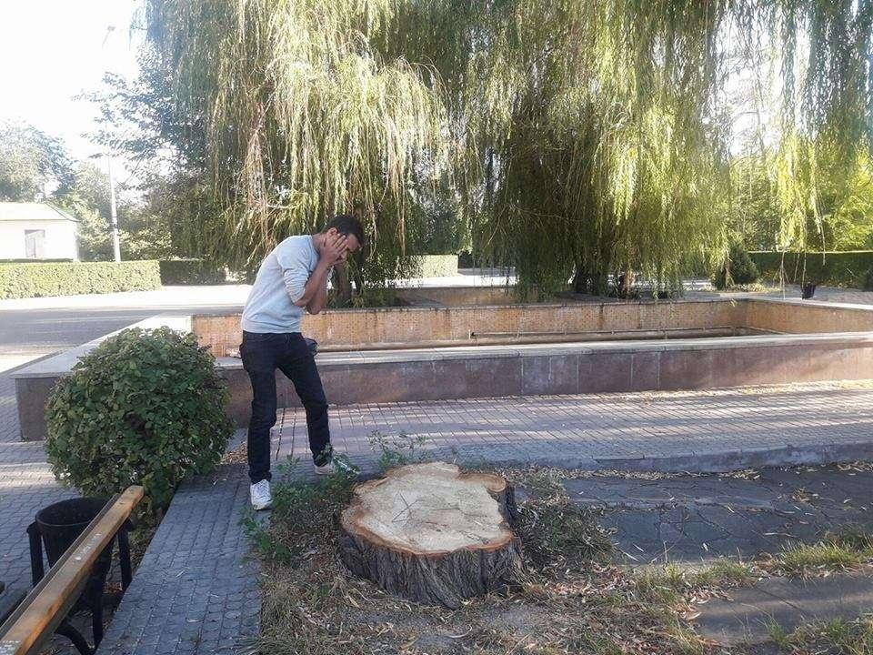 Рабочие уничтожили многолетнюю иву возле фонтана