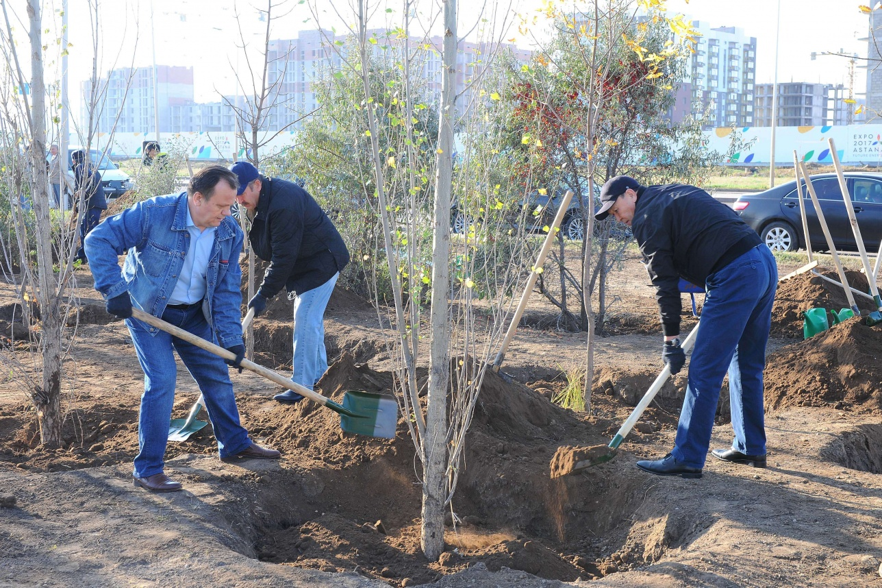 Посадка деревьев депутатами