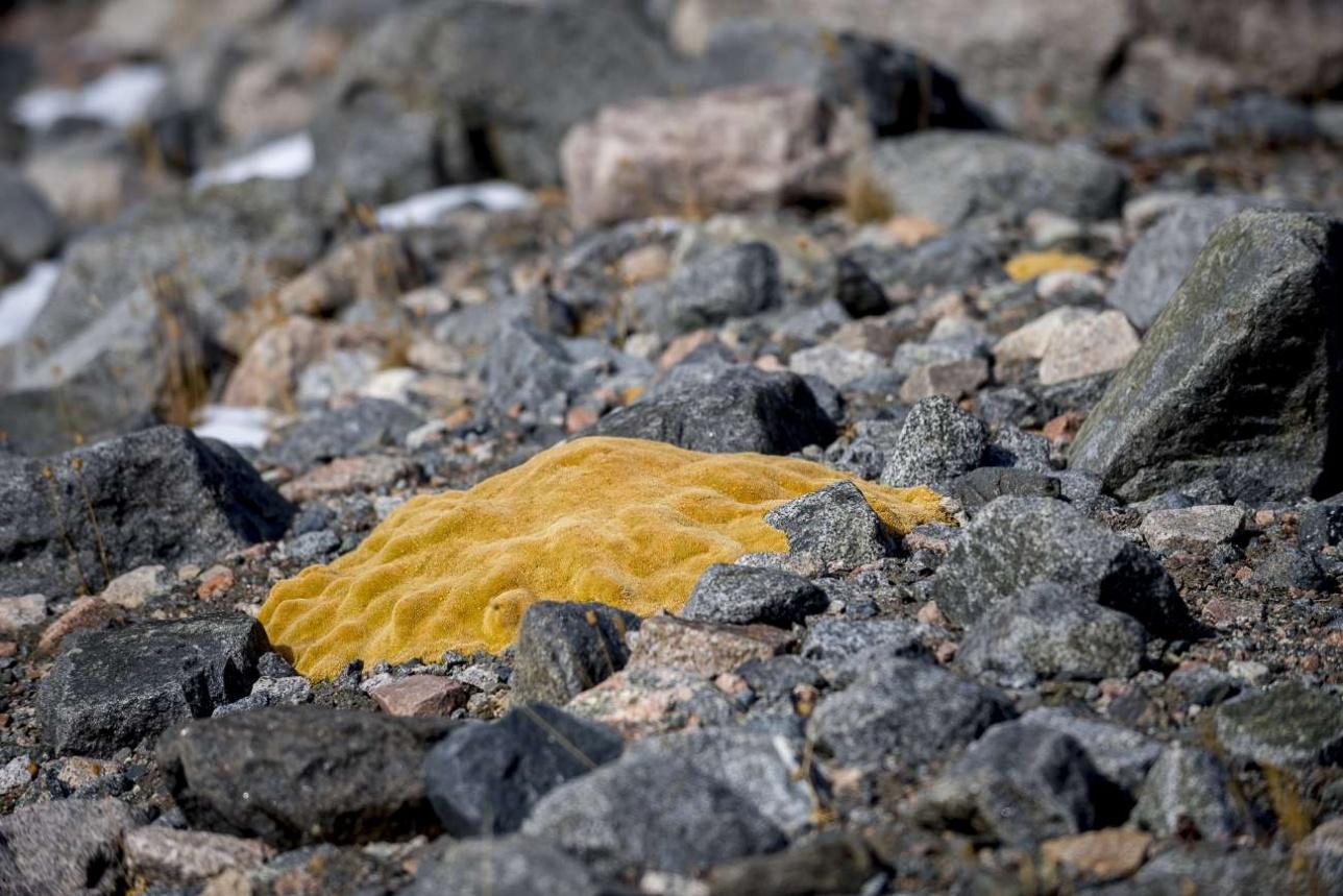 Растительность на ледниках весьма своеобразная