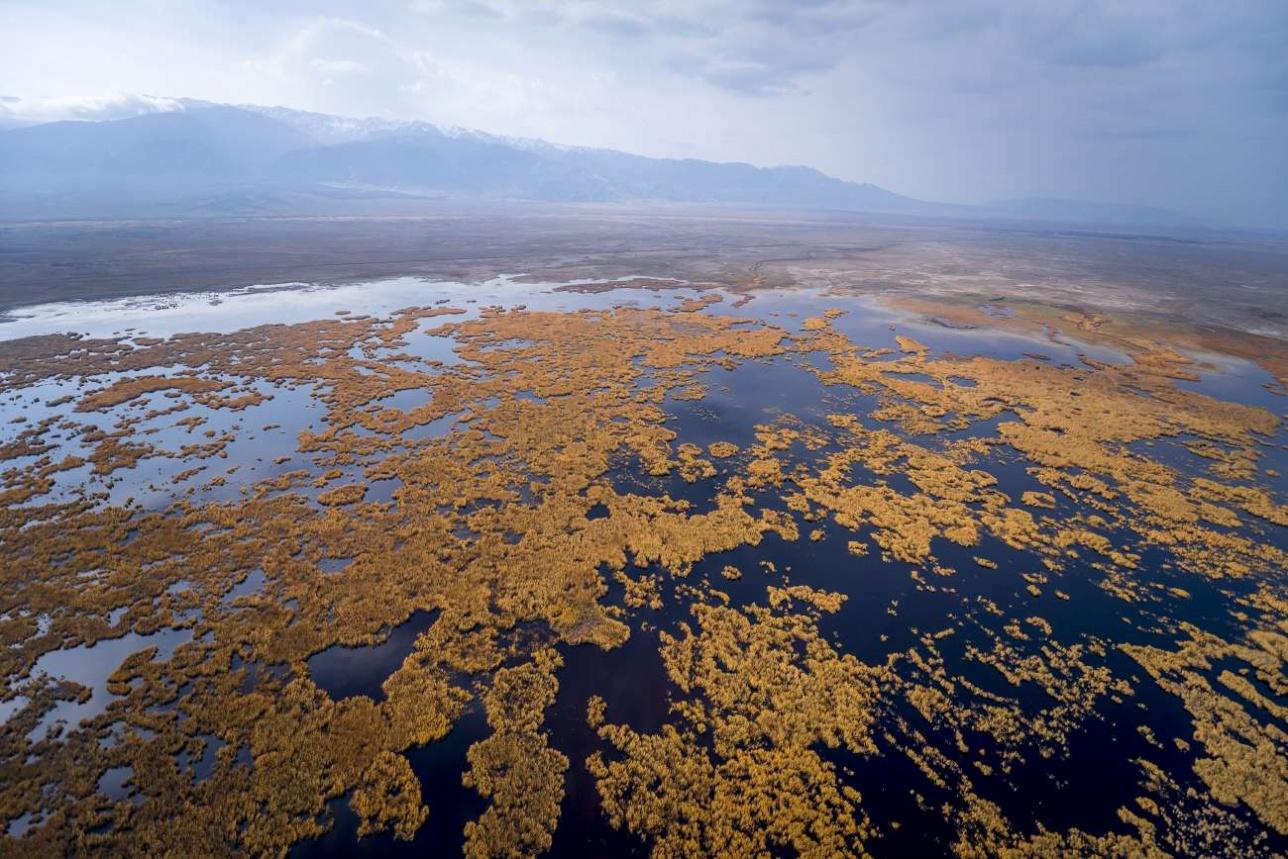 Южное побережье озера Алаколь