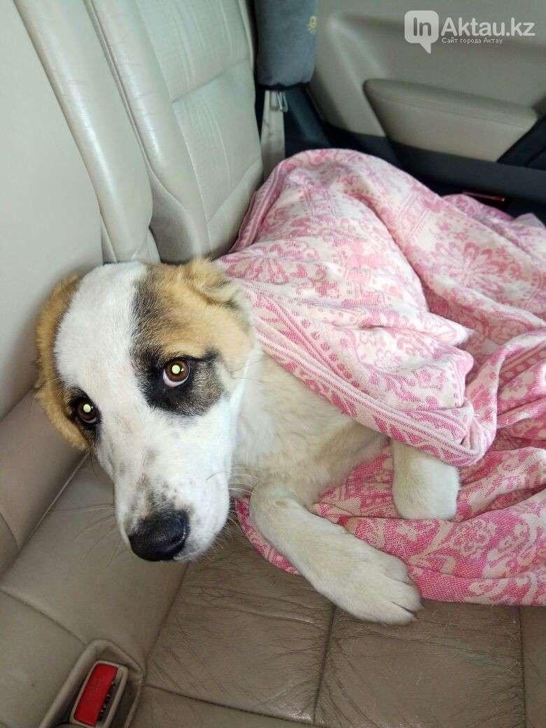 Спасенный щенок