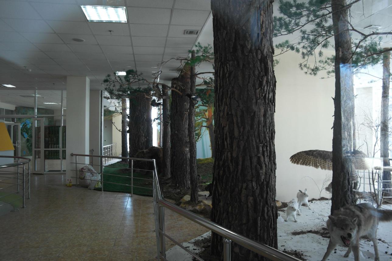"""На момент репортажа зал """"Животный мир в естественной среде"""" ещё дорабатывался, сейчас он открыт для посетителей"""
