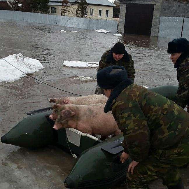 Спасатели эвакуируют не только людей, но и домашних животных