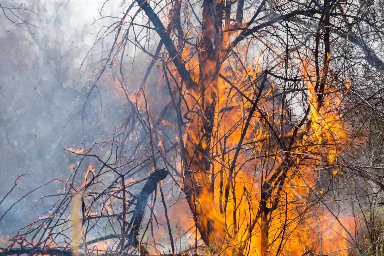 Тугайная растительность горит очень быстро из-за высокого содержания в ней эфирных масел