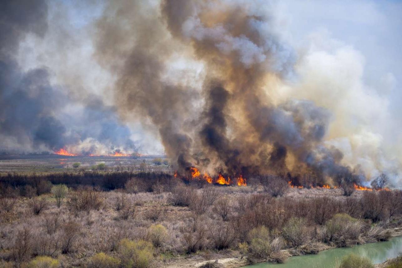 Обычно пожары в дельте реки Или начинаются когда сходит снег