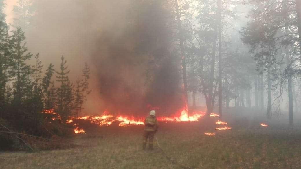 В Семее горит сосновый бор на площади около 40 гектаров