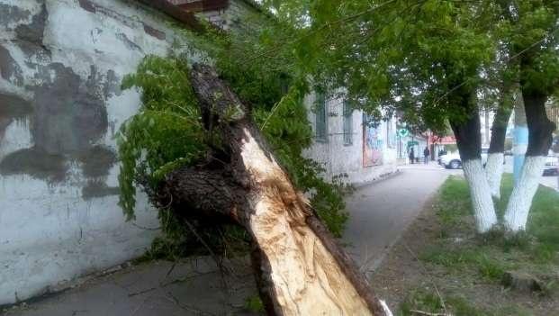 По словам местных жителей, упавшие деревья повредили электрические провода