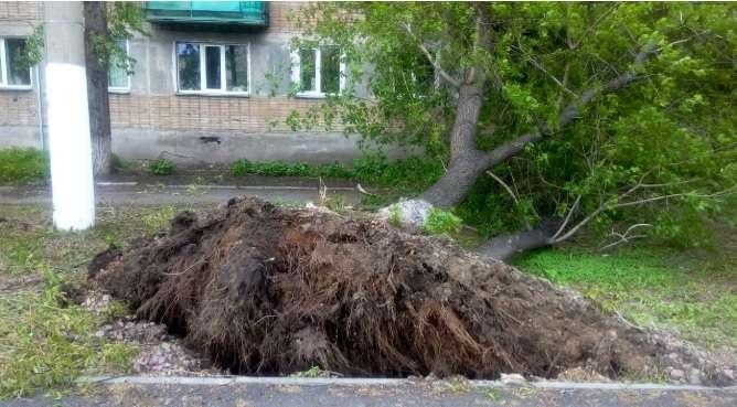Сильный ветер повалил деревья в Петропавловске