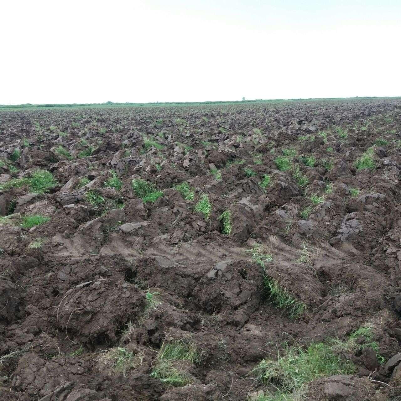 В посёлке Тайтобе Косшынского сельского округа без разрешения местных властей вспахали 15 га земли