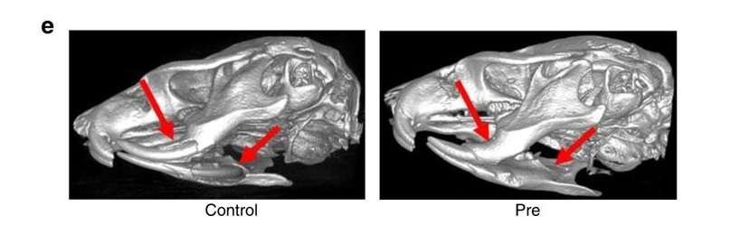 KBU2046 подавляет разрушение кости по сравнению с контрольной группой