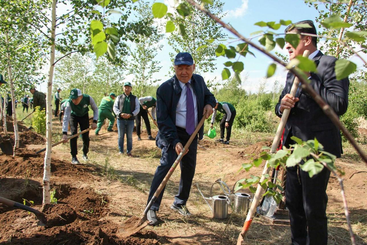 Нурсултан Назарбаев по традиции поучаствовал в высадке саженцев в зелёном поясе Астаны