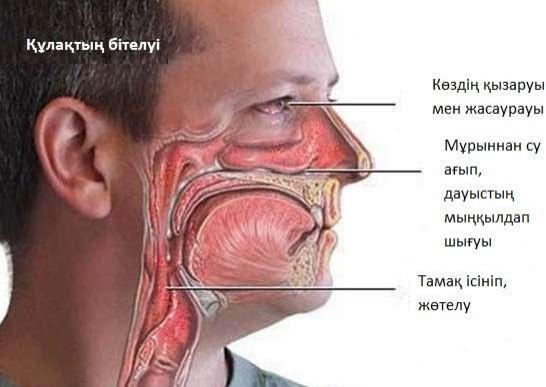 Аллергияның белгілері