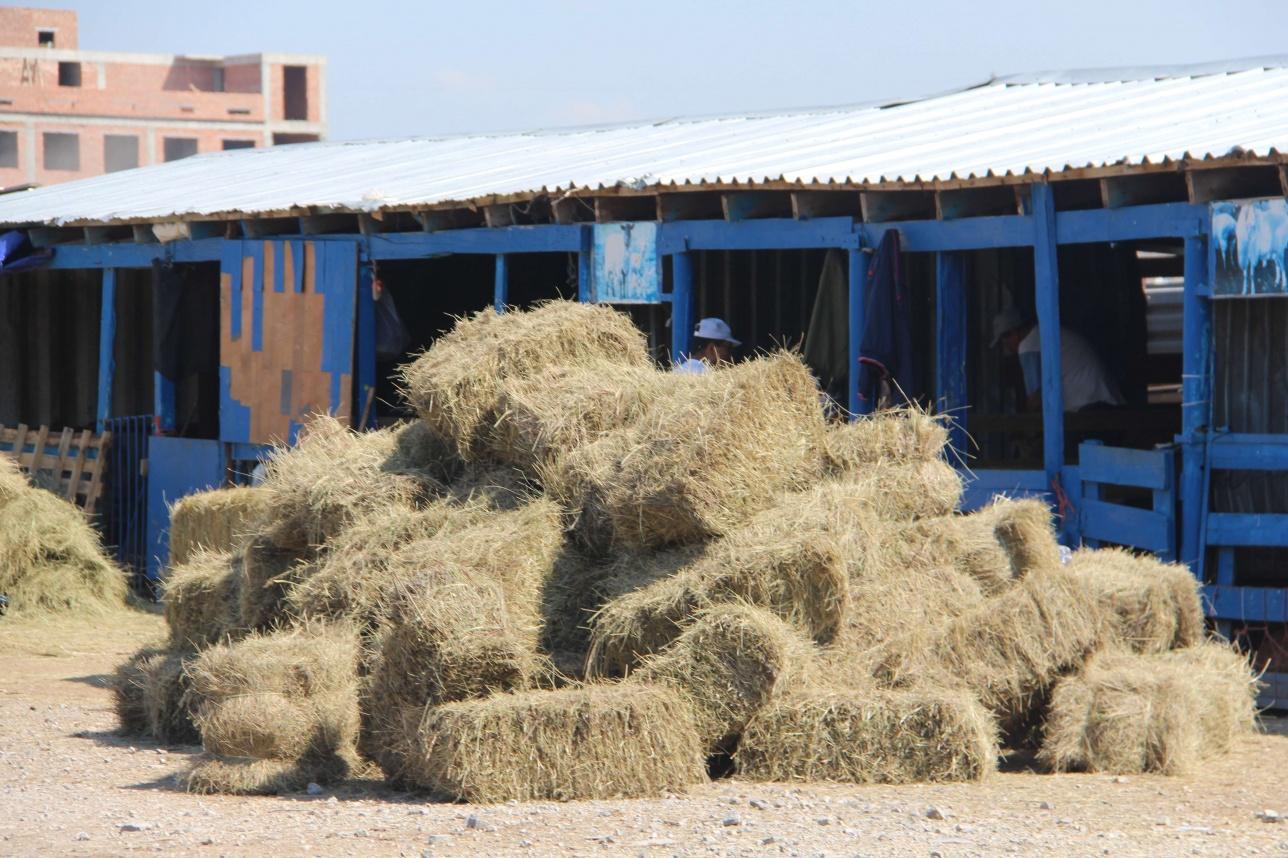 Мал базарындағы малдың жем-шөбі де дайындалыпты