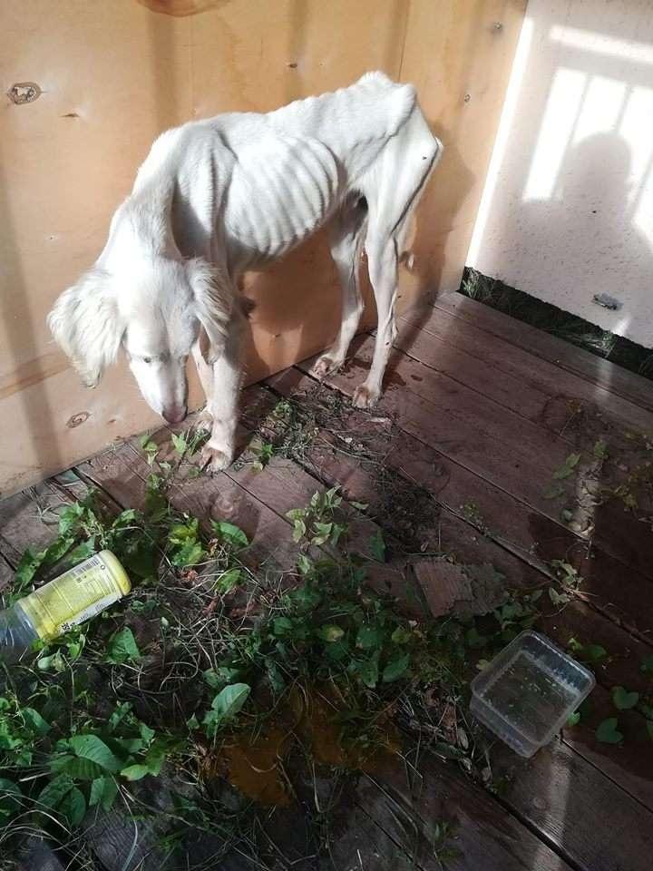 В интернете появились фото и видео истощённых собак породы тазы