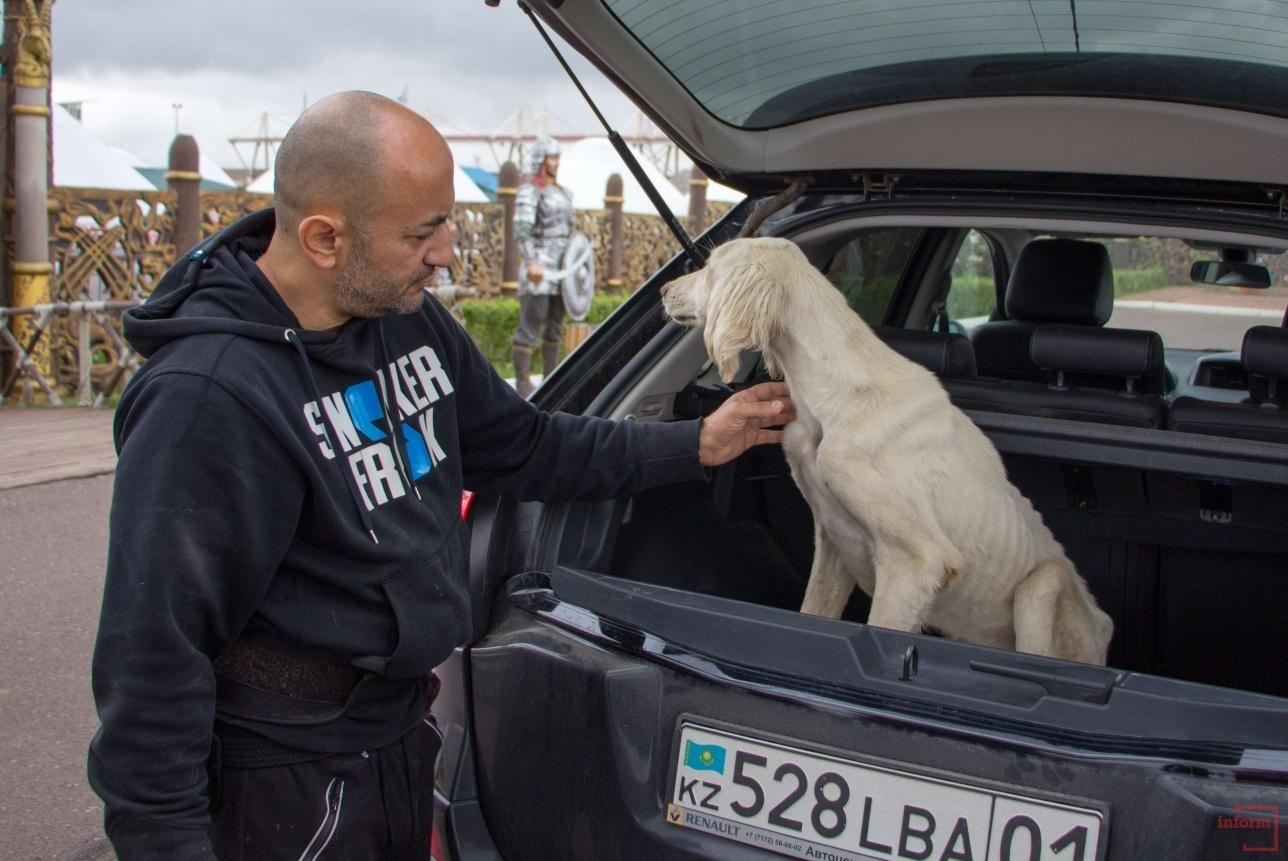 Собаку отвезли в ветеринарную клинику, где его обследовали и назначили лечение.