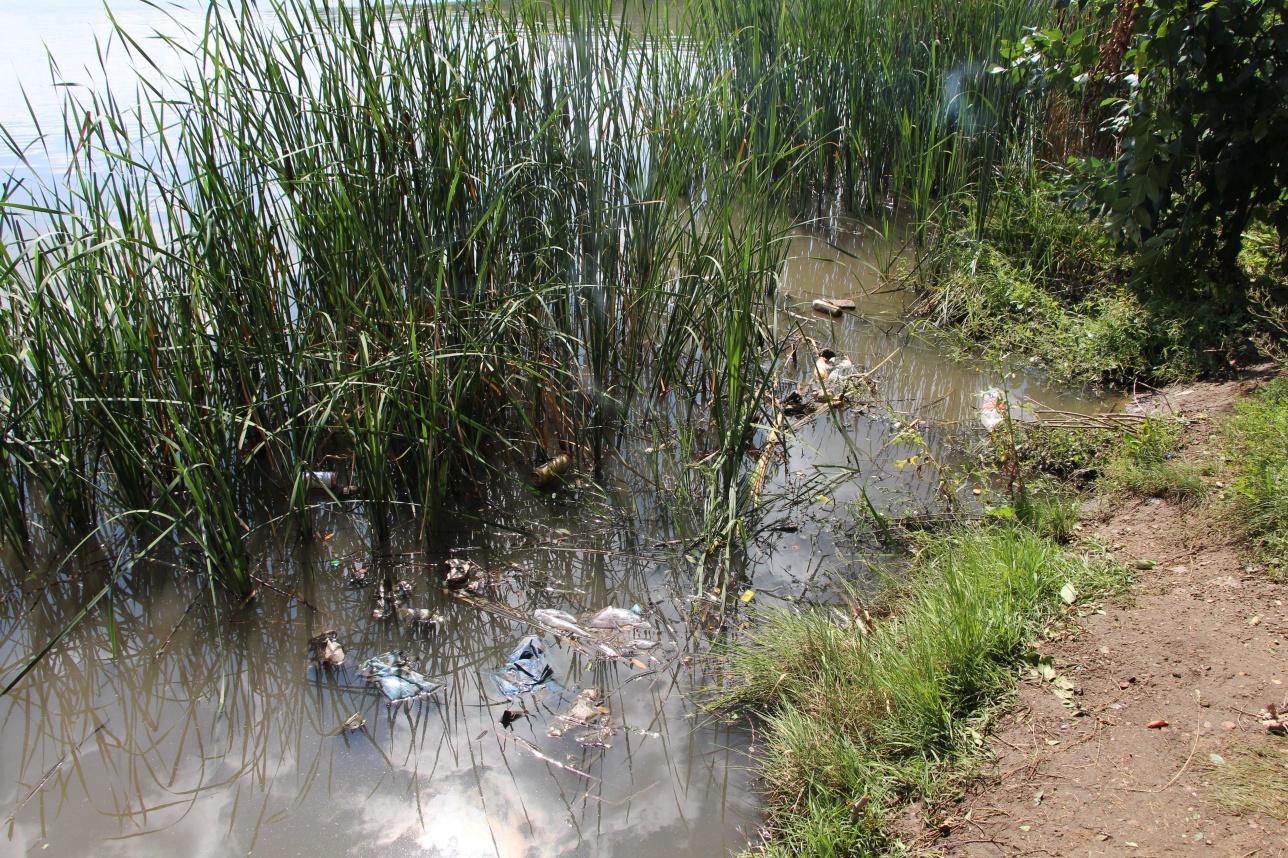 В воде плавает мусор и и присутствует неприятный запах тины и болота