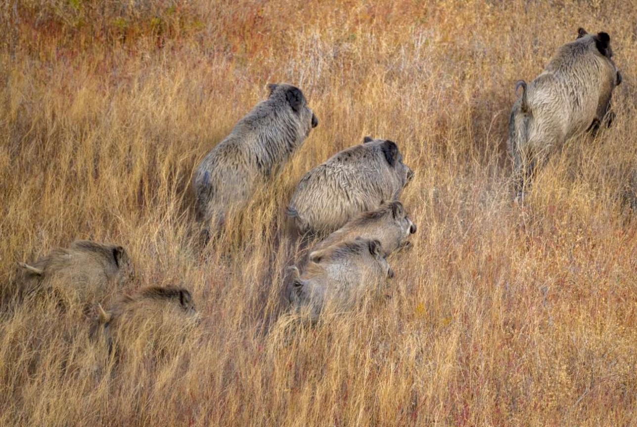 В Мойынкуме обитают крупные млекопитающие