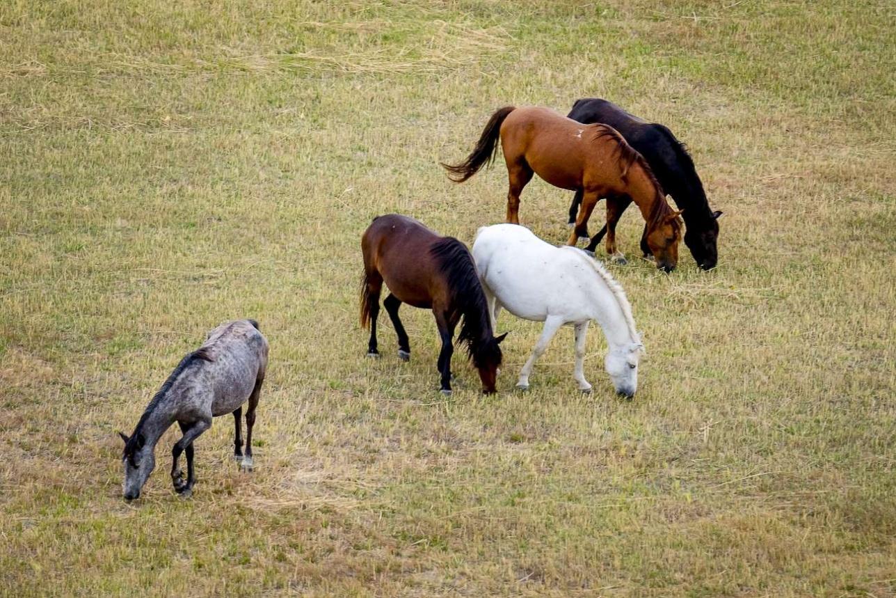 Ничего не подозревающие лошади пасутся рядом с мощным пожаром