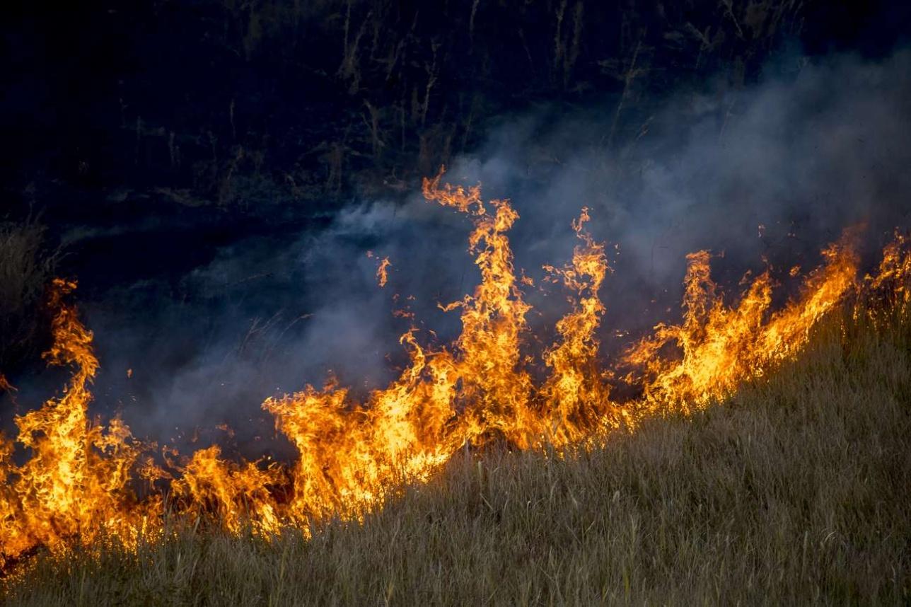 Такие пожары уничтожают все на своём пути