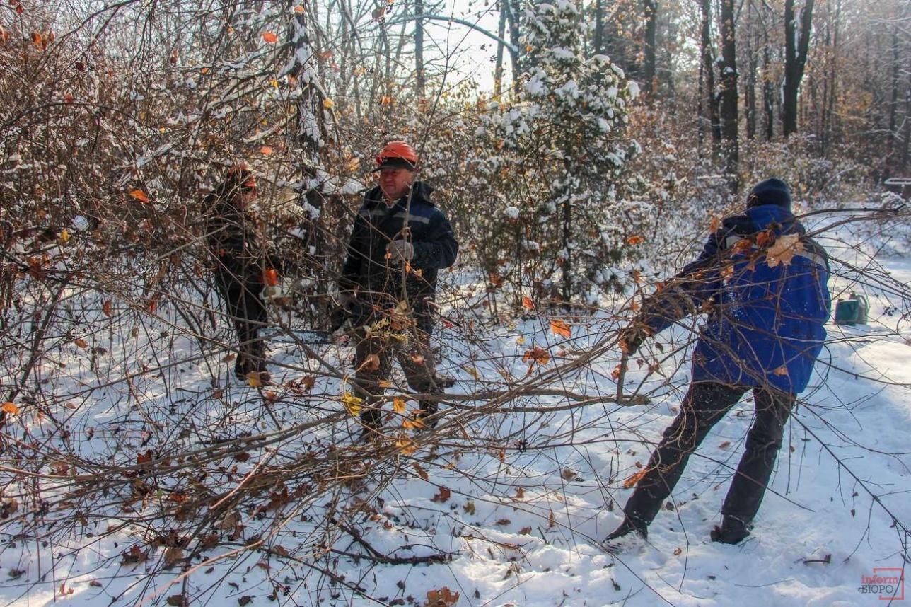 Рабочие срубили 11 деревьев и сделали санобрезку