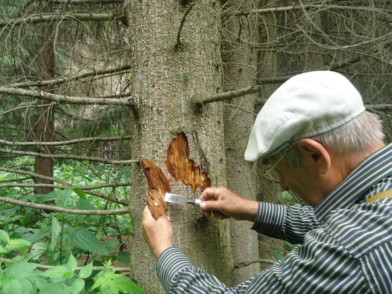 Специалисты обследовали деревья