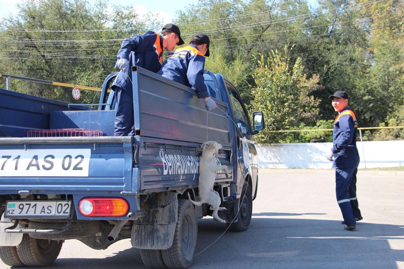 Отлов животных в Алматы