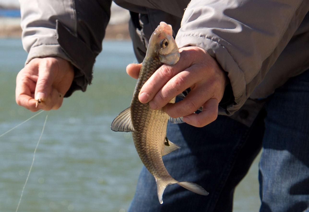 По словам местных рыбаков, рыба в Урале есть, но не много