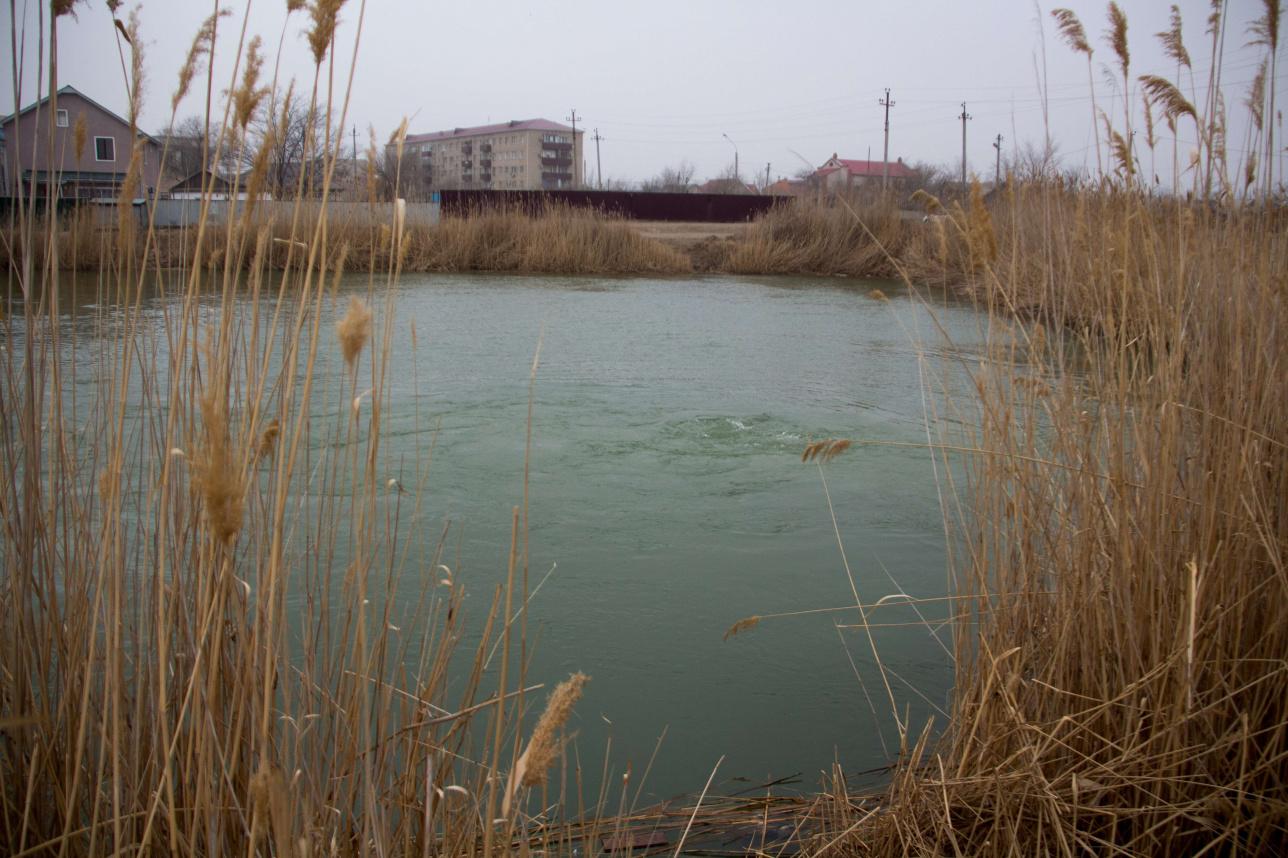 """Участок канала """"Перетаска"""", где был зарегистрирован первый случай гибели рыбы"""