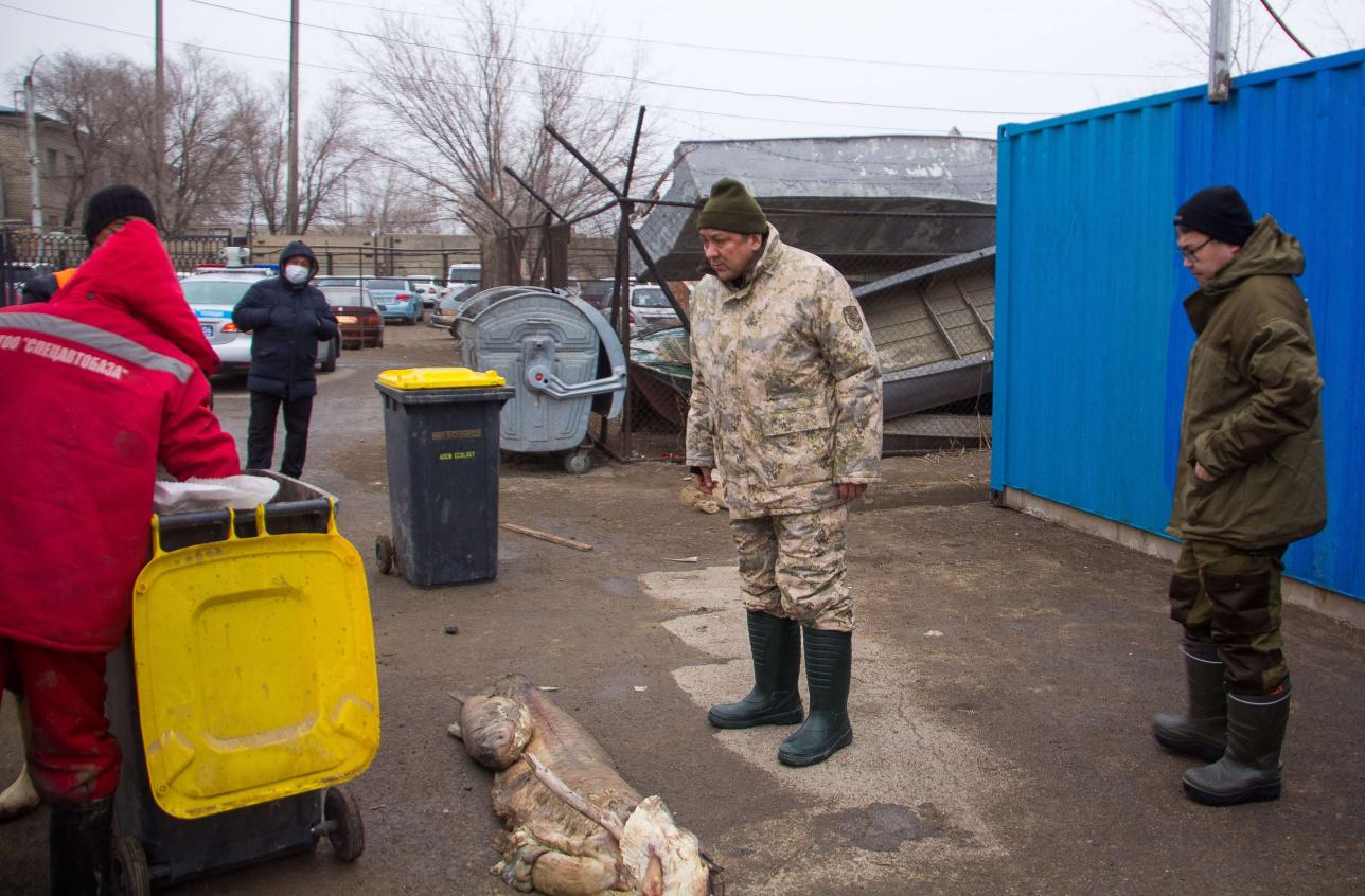 Нурлан Ногаев с инспекцией на базе, в которой проводят процедуру взвешивания мертвой рыбы