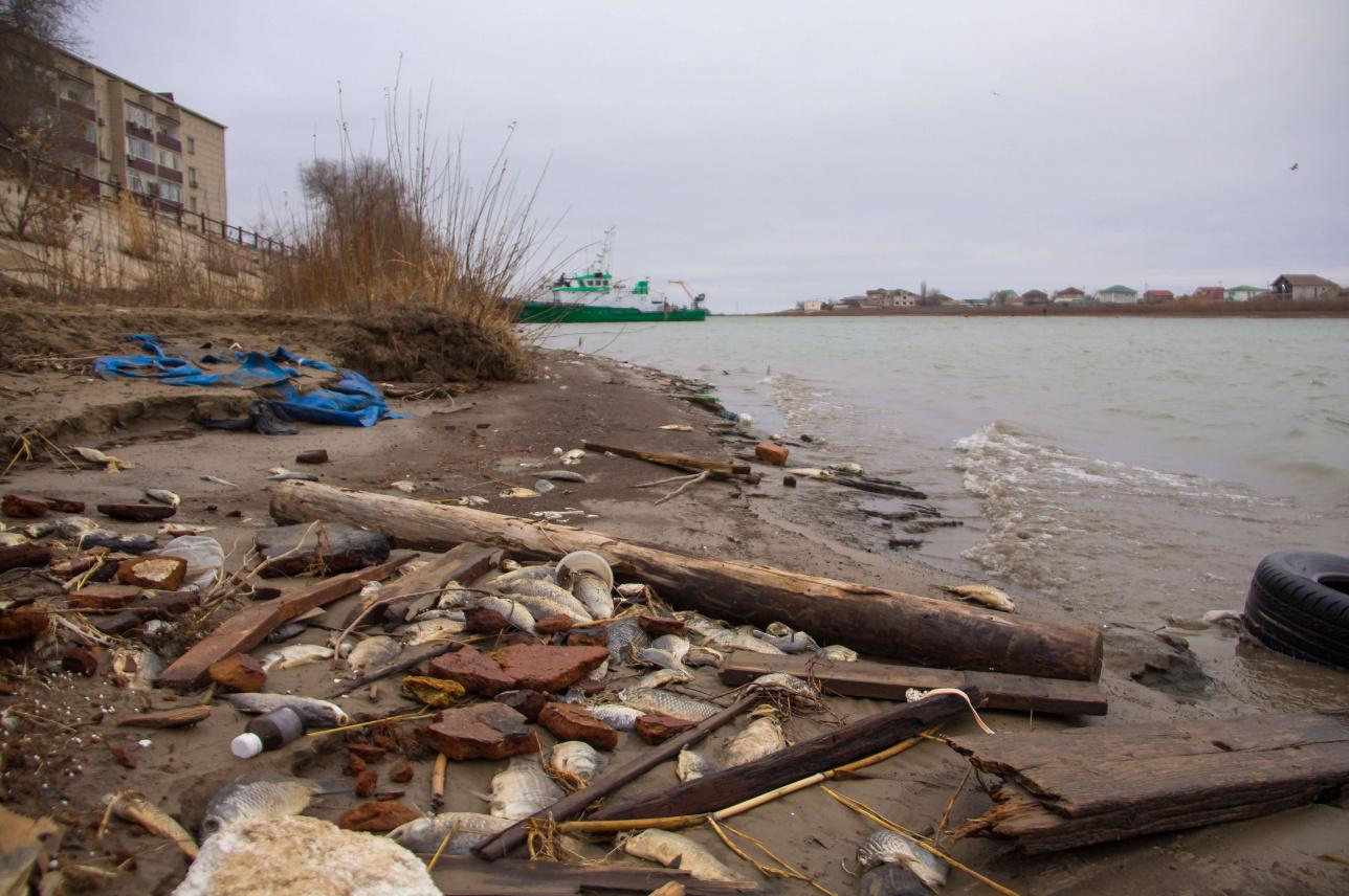 """Мертвая рыба на набережной в """"районе рыбаков"""", Атырау"""