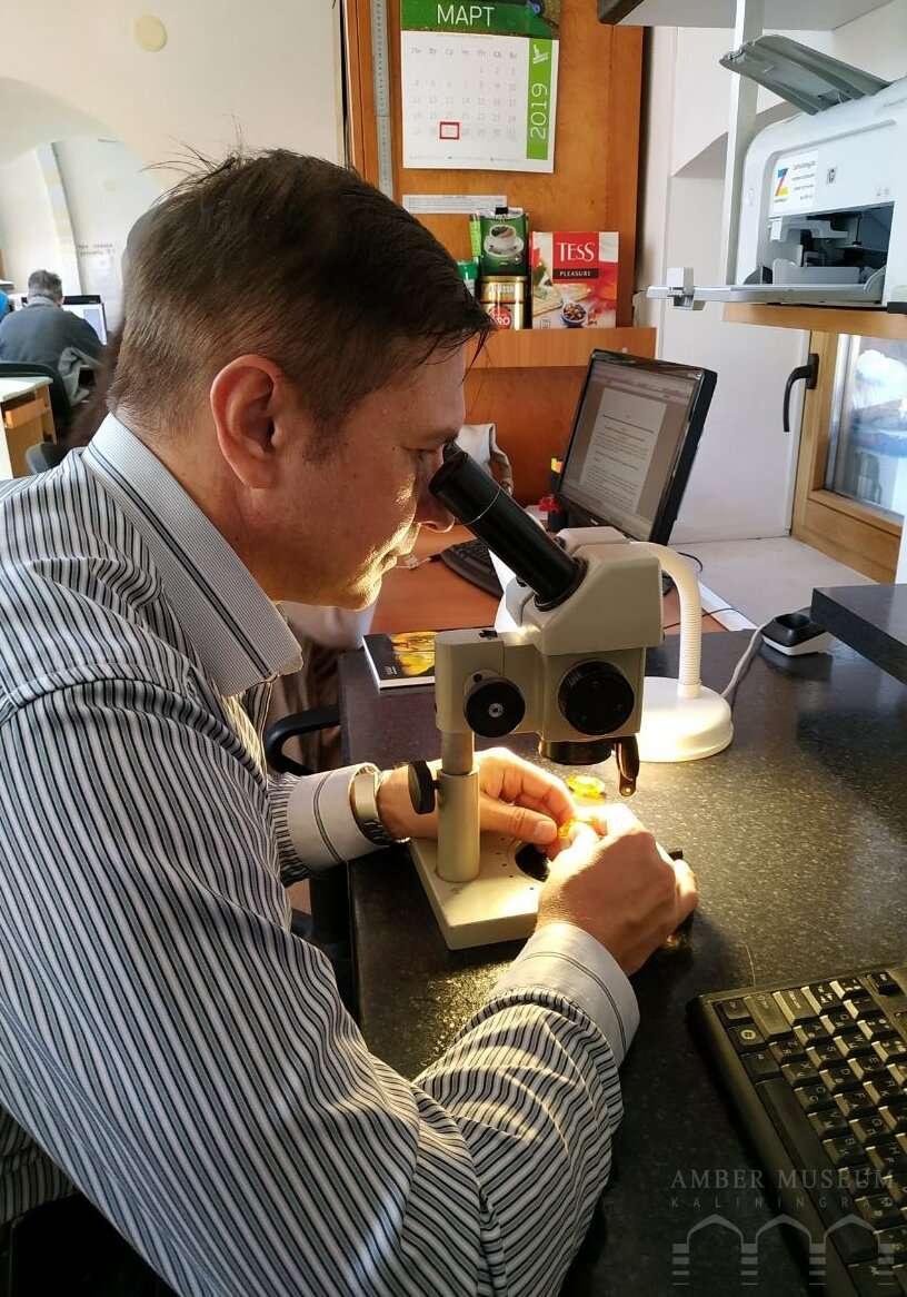 Андрей Легалов обнаружил около 10 видов неизвестных науке насекомых