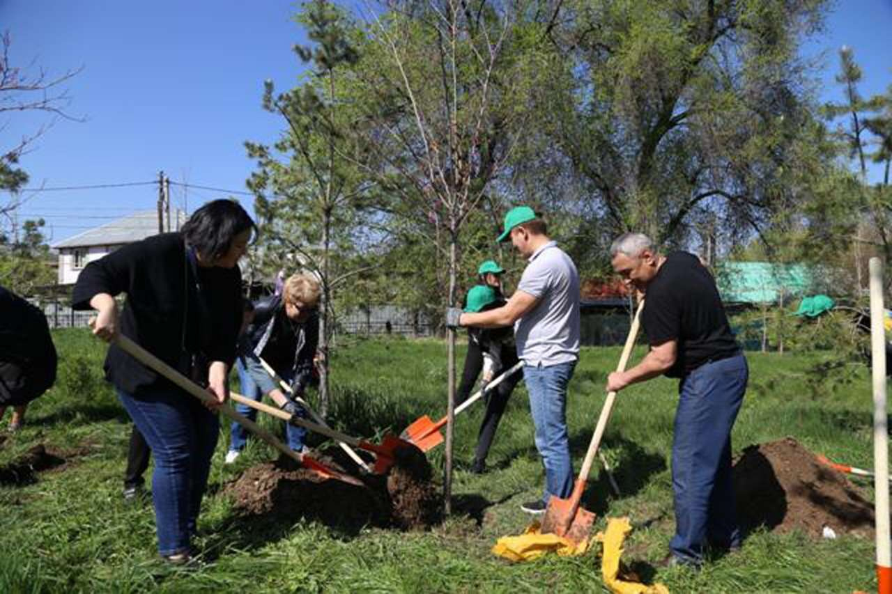 Всего весной в городе планируют посадить 12 тысяч саженцев.
