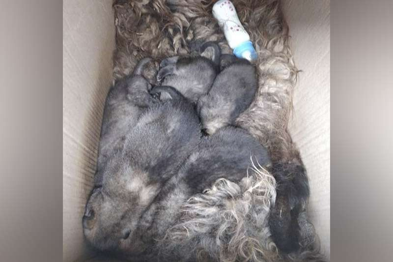 Сотрудники природоохранной полиции спасли пятерых волчат
