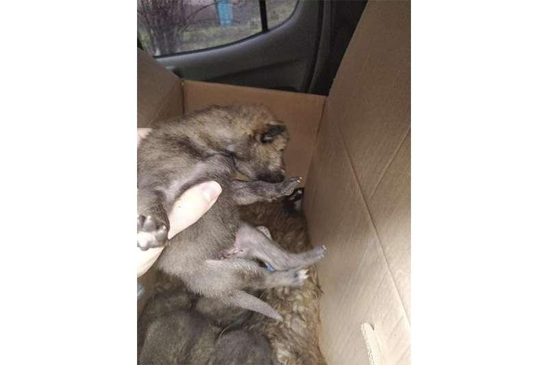 Животных передали в зоопарк Караганды